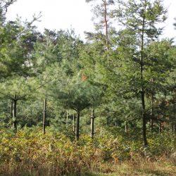 Deutschlandweite Baumpflanzaktion – wir schenken Ihnen einen Baum.